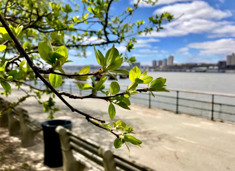 New York Riverside Park
